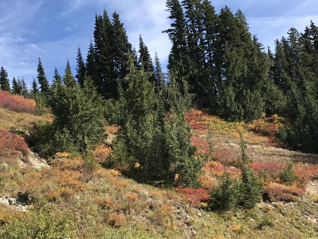Mont Rainier aux couleurs de l'automne