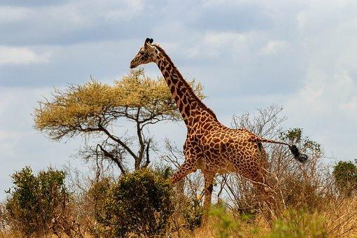 Un bon programme de vacances pour un séjour au Kenya