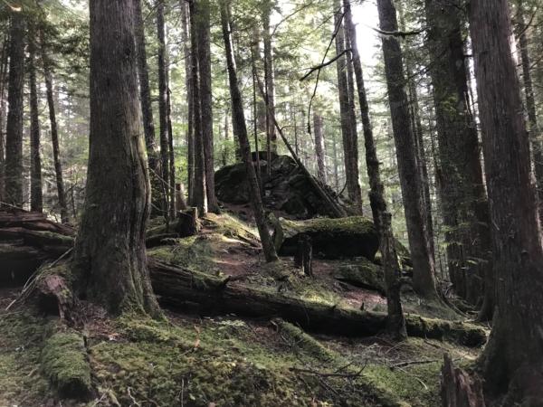 Trail dans la forêt du Mont Rainier