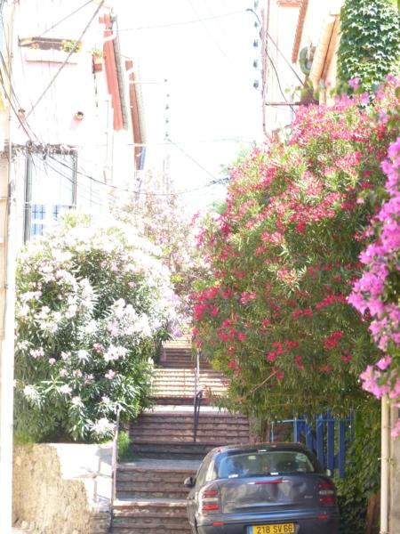 Rue de Banyuls