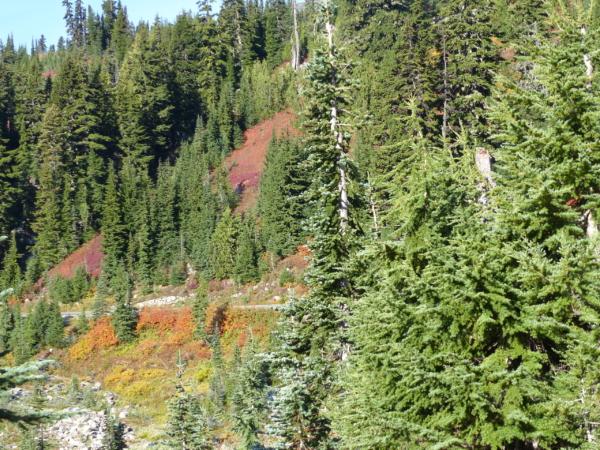 Paysage du Mont Rainier
