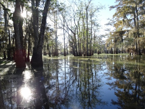 Sur la route de Lafayette Lake Martin le Bayou