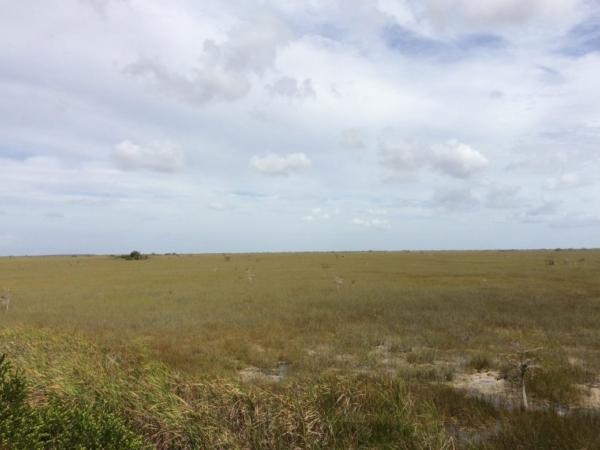 Everglades 2016