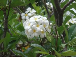 Townsville très fleuri