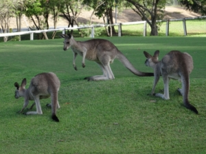 Dorrigo Les vedettes de l'Australie