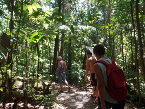 Eungella une petite marche dans la forêt