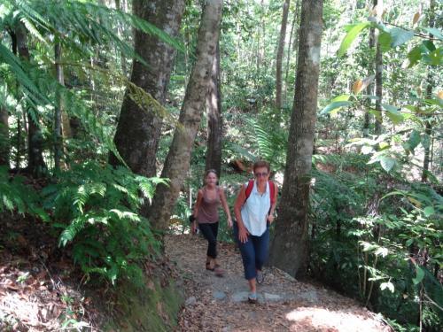 Eungella petite balade dans la forêt tropicale