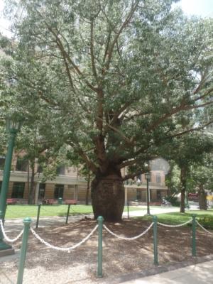 Brisbanne jardin botanic